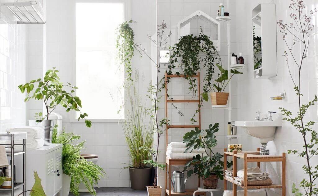 7 видов растений, которые подойдут для ванной комнаты без окон