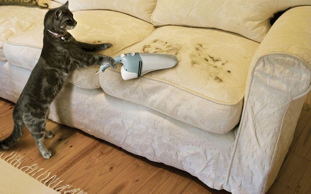 Как отмыть диван