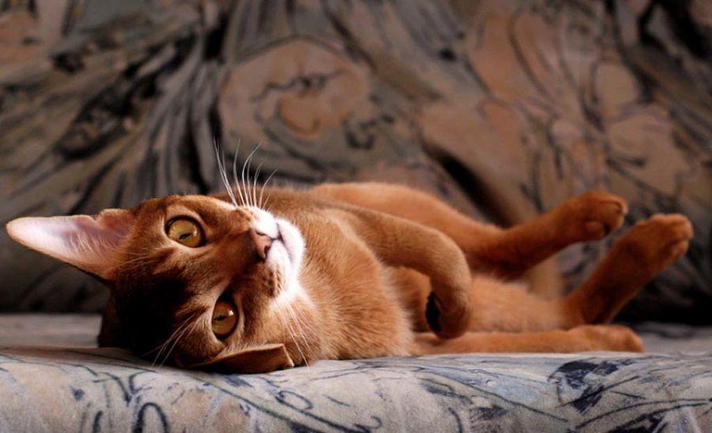 При наличии питомцев нужно выбирать диван с повышенной износостойкостью