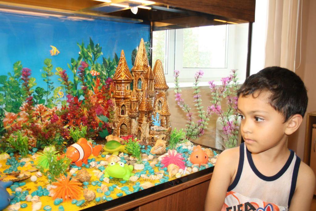 Особенно полезен аквариум для школьников