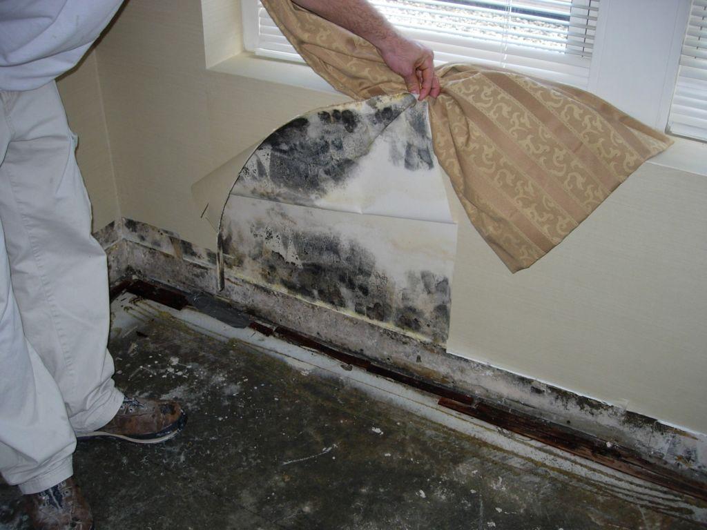 Причины образования грибков на стенах могут быть разные, а вот удалить черный налет помогают далеко не все способы