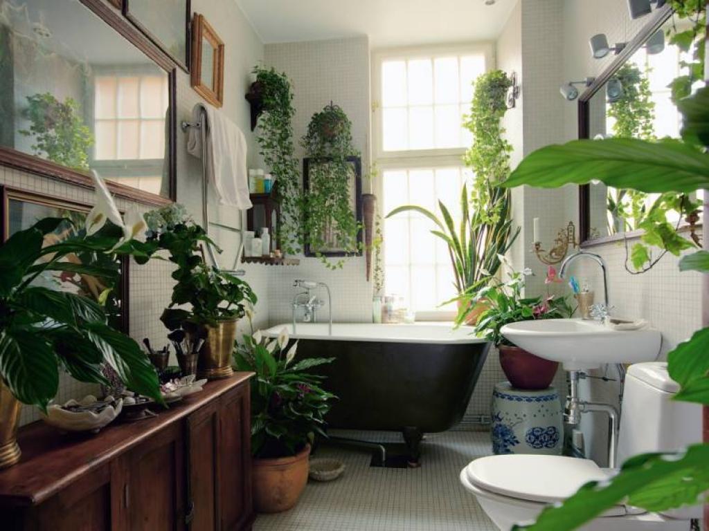 Польза растений, расположенных в ванной комнате, очевидна