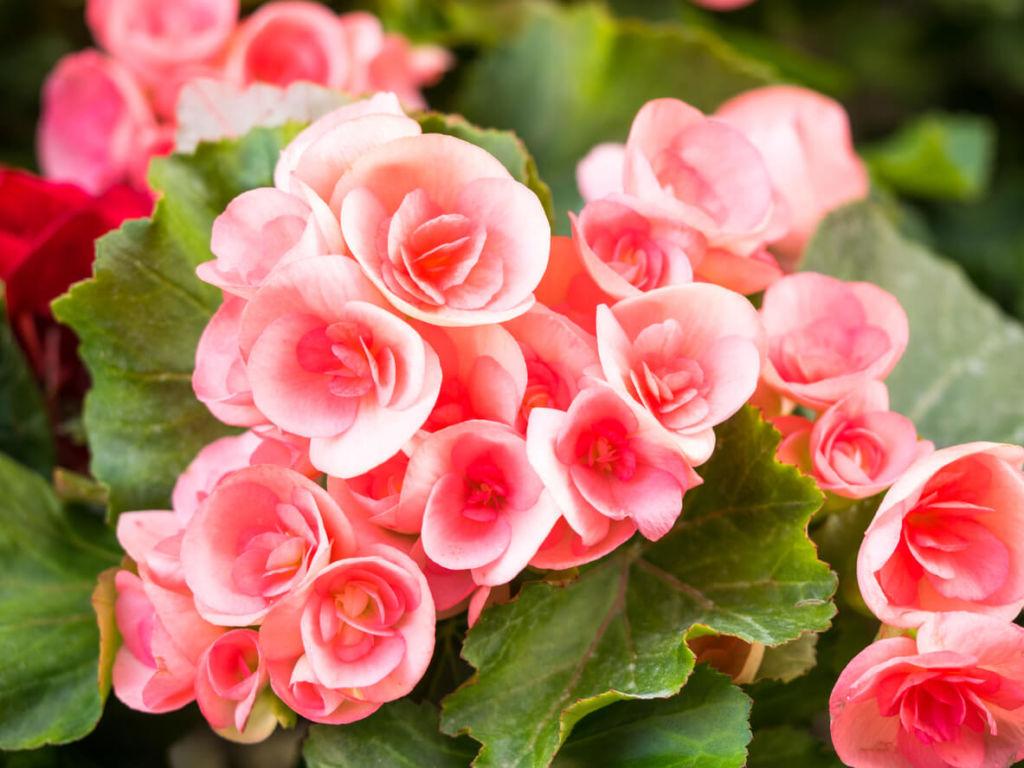 ТОП-12 цветов для детской комнаты