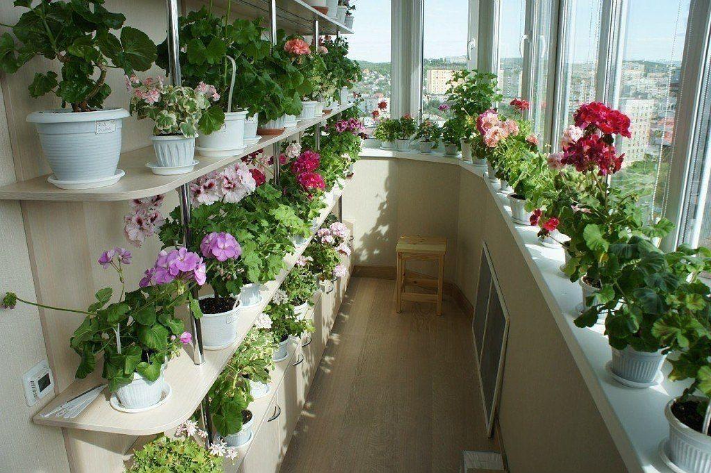 При размещении большого количества цветов лучше застеклить балкон