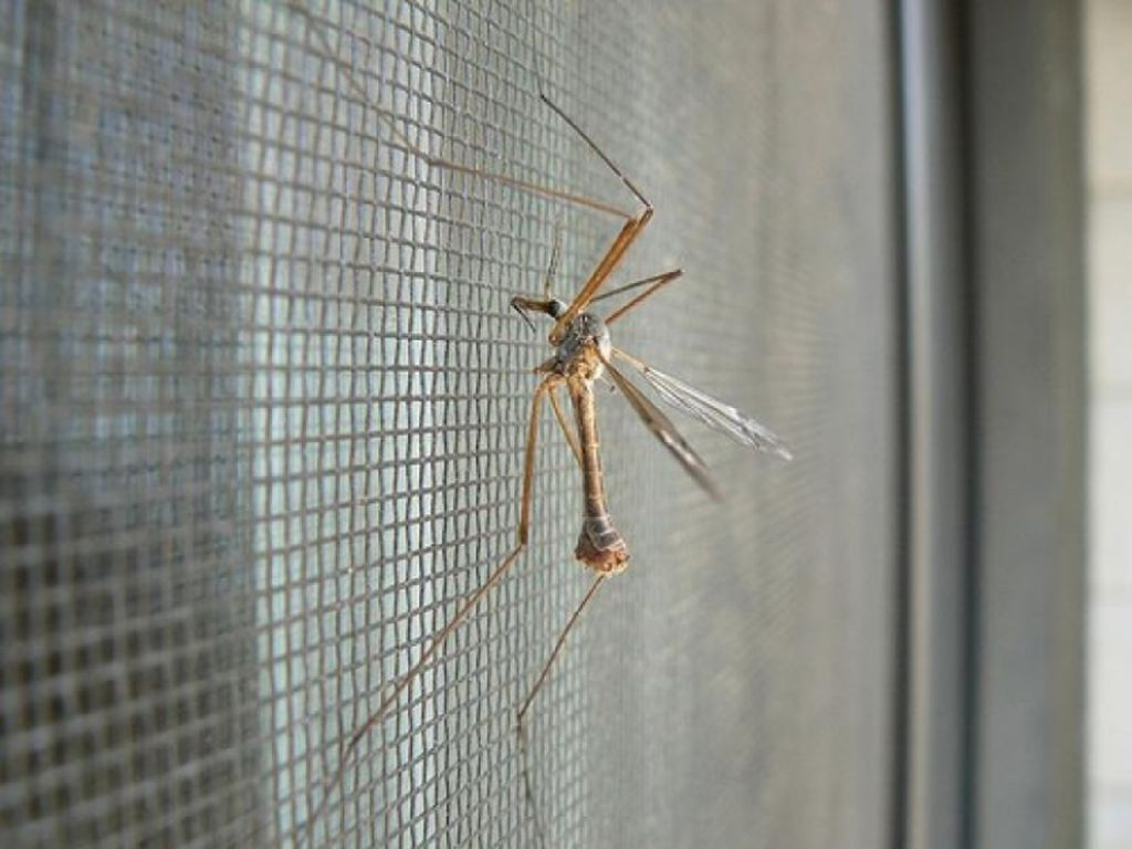 Для защиты от насекомых обязательно нужно установить москитные сетки