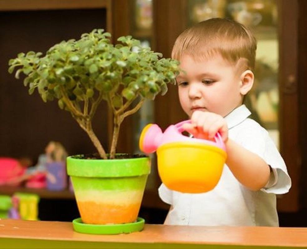 Какие цветы можно держать в детской комнате